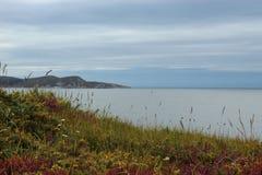 Erba e fiori in scogliere e nel fondo del mare fotografia stock libera da diritti