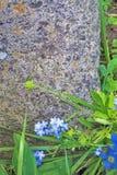 Erba e fiori sopra una pietra della roccia Fotografie Stock Libere da Diritti