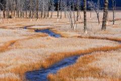Erba e flusso glassati arancioni, Yellowstone Immagini Stock