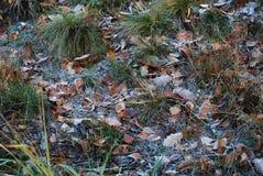 Erba e foglie cadute coperte di gelo fotografia stock libera da diritti