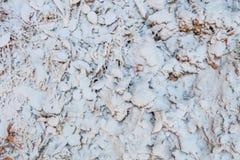 Erba e foglie spruzzate con il fondo della neve Fotografia Stock Libera da Diritti