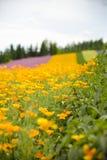 Erba e giardino floreale colurful Immagini Stock Libere da Diritti