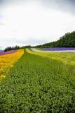 Erba e giardino floreale colurful Fotografie Stock Libere da Diritti