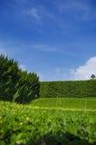 Erba e parete degli alberi (boschetto) Immagine Stock