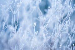 Erba e piante glassate Immagini Stock