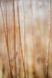 Erba e piante glassate Fotografie Stock Libere da Diritti
