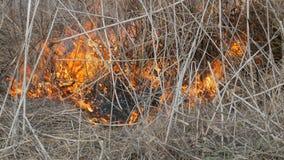 Erba e rami brucianti vicini sulla vista Fuoco selvaggio pericoloso nella natura archivi video