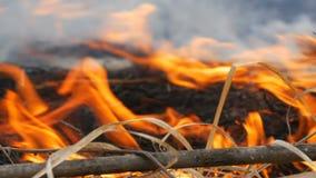 Erba e rami brucianti vicini sulla vista Fuoco selvaggio pericoloso nella natura video d archivio