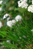 Erba e scarabeo di clic Immagini Stock