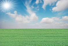 Erba e sole Immagini Stock