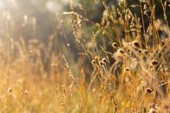 Erba e sole del campo Fotografie Stock Libere da Diritti
