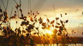 Erba e sole di autunno archivi video