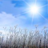 Erba e sole glassati di inverno Immagini Stock Libere da Diritti