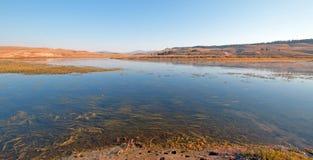Erba e vegetazione acquatiche nel fiume Yellowstone nella valle di Hayden nel parco nazionale di Yellowstone nel Wyoming Fotografie Stock Libere da Diritti