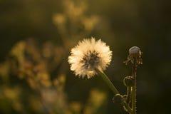 Erba e wildflower di autunno Fotografia Stock Libera da Diritti