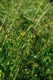 Erba e Wildflowers di estate Fotografia Stock Libera da Diritti