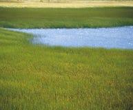 Erba ed acqua della palude Immagini Stock Libere da Diritti