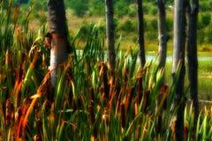 Erba ed alberi alti Fotografia Stock
