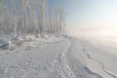 Erba ed alberi coperti di gelo Fotografie Stock Libere da Diritti
