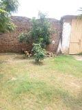 Erba ed alberi verdi Fotografia Stock Libera da Diritti