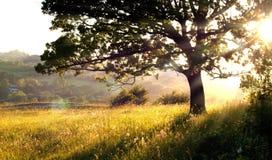 Erba ed albero lunghi all'indicatore luminoso di mattina Fotografie Stock Libere da Diritti