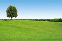 Erba ed albero sul cielo libero Immagine Stock