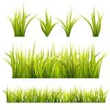 Erba ed erbe, paesaggio di estate Fotografie Stock