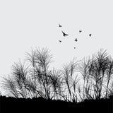 Erba ed uccello Immagini Stock