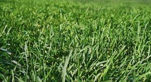 Erba fertile verde su un campo spazioso fotografie stock