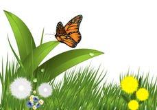 Erba, fiori e farfalla, vettore dei cdr Immagini Stock Libere da Diritti