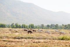 Erba foraggera del bestiame Fotografia Stock