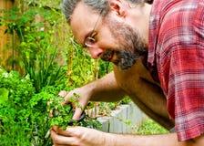 Erba fresca dal giardino domestico Immagini Stock Libere da Diritti