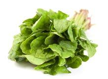 Erba fresca degli spinaci Immagine Stock Libera da Diritti