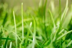 Erba fresca tranquilla in mezzo della pianta della giungla in questo parco con i raggi di luce che colpiscono le lame di erba e d Fotografia Stock