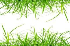 Erba fresca verde isolata sui precedenti bianchi Fotografia Stock Libera da Diritti