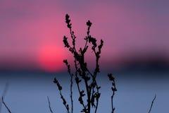 Erba gelida al tramonto di inverno Immagine Stock