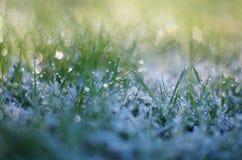 Erba ghiacciata che brilla di mattina luce! Fotografia Stock Libera da Diritti