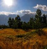 Erba gialla alta che soffia nel vento, Himalaya, India il quadrato pubblica Fotografia Stock Libera da Diritti