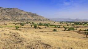 Erba gialla Landcape del cielo blu Fotografie Stock Libere da Diritti