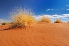 Erba gialla nel deserto Fotografia Stock Libera da Diritti