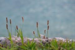Erba i gambi lungo la riva del lago Immagini Stock Libere da Diritti