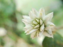 Erba il fiore Fotografia Stock