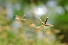 Erba il fiore fotografie stock