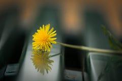 Erba il fiore Immagini Stock Libere da Diritti