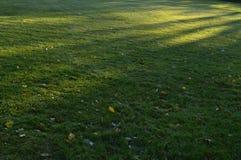 Erba il prato nelle ombre del parco di mattina sulla terra Fotografie Stock