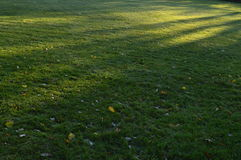 Erba il prato nelle ombre del parco di mattina sulla terra Fotografie Stock Libere da Diritti