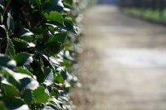 Erba il recinto, erba fresca verde per fondo Fotografia Stock