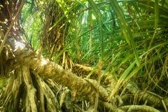 Erba invasa e palma arrestata nell'inverno Fotografia Stock