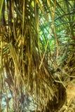 Erba invasa e palma arrestata nell'inverno Immagine Stock