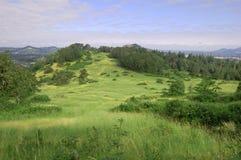 Erba la collina con il ontop degli alberi del supporto Pisgah Immagini Stock